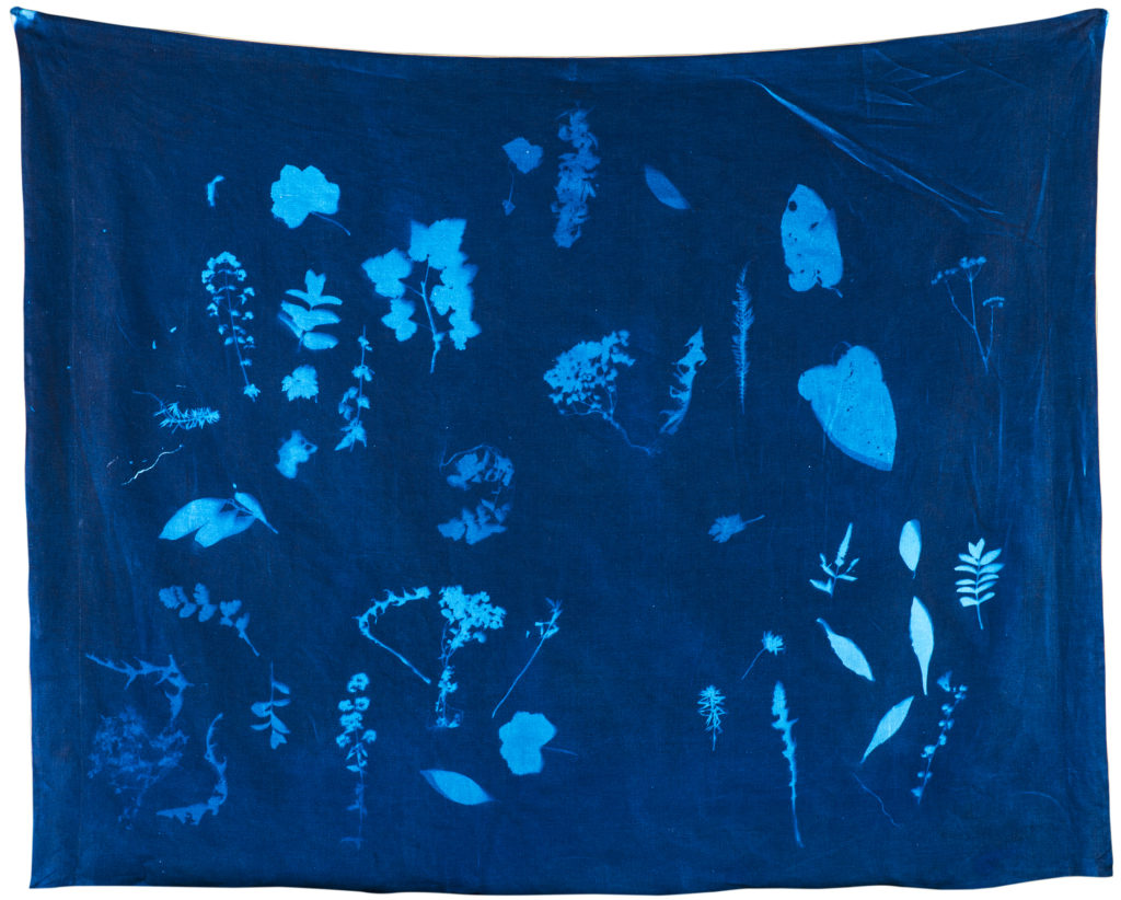 cyanotype small
